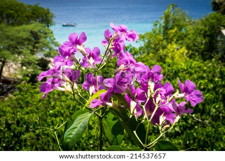 Pink  Flowers -Views around Westpunt and Wataluma Curacao a Caribbean Island Netherland Antilles - stock photo