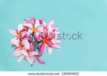 Pink frangipani Plumeria  flowers over shiny water background-1 - stock photo