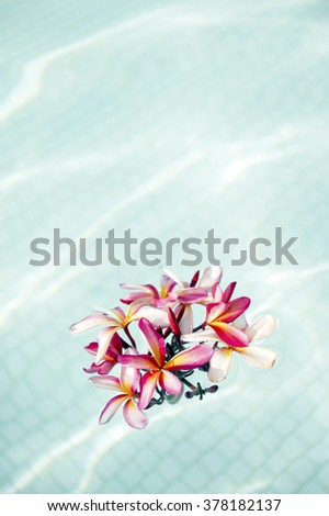 Pink frangipani which floated in the pool-2 - stock photo