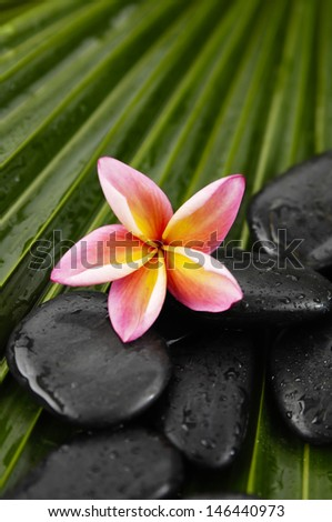 Pink frangipani with spa stones on palm leaf texture - stock photo