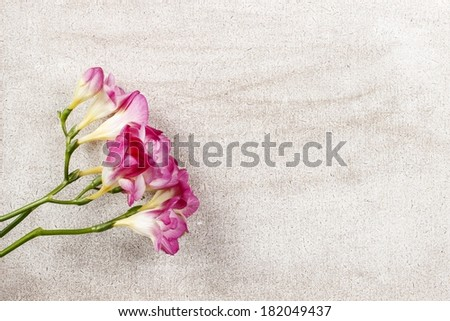 Pink freesia flowers on wooden background. Top view, copy space - stock photo