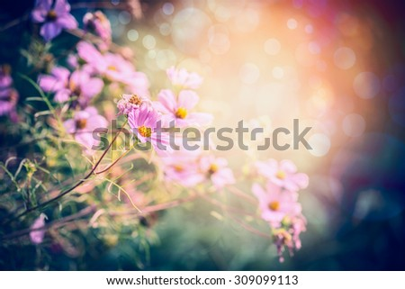 Pink garden or park flowers on sunny nature background - stock photo