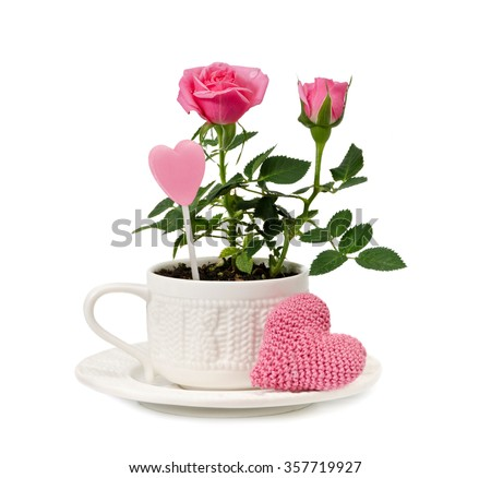 Pink garden roses in a cup and knitted heart are  isolated on a white background  - stock photo