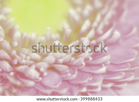 Pink Gerber Daisy - soft focus, desaturated, with multiple filters added to give it a dreamy look - stock photo
