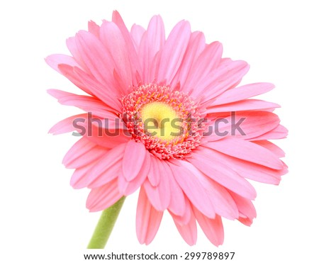 Pink gerbera flower, isolated on white background - stock photo