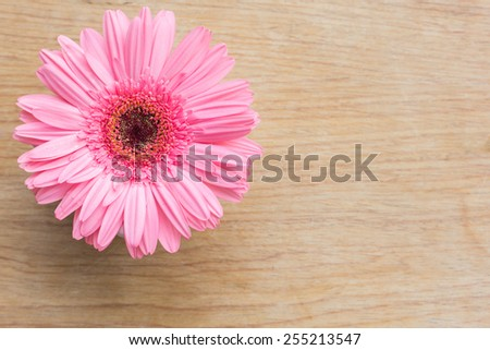 Pink gerbera flower on wooden table. - stock photo