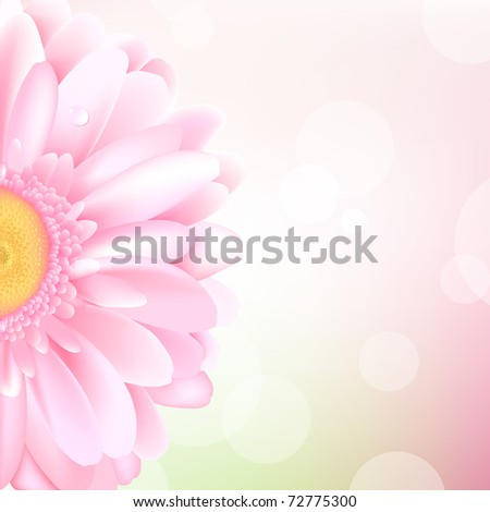 Pink Gerbera, Isolated On White Background - stock photo