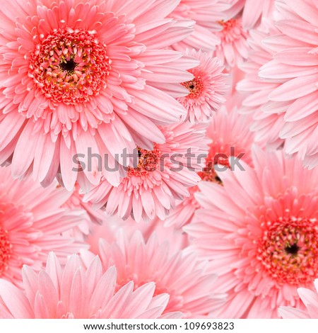 Pink Gerbera seamless pattern floral background - stock photo