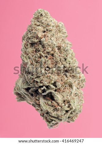 Pink Grapefruit Marijuana Bud on a Pink Background - stock photo