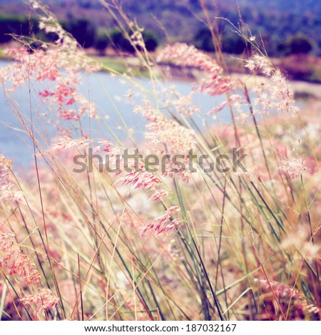 Pink grass field with retro filter effect - stock photo