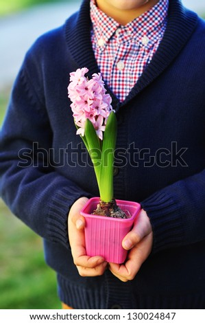 Pink hyacinth in child's hands - stock photo