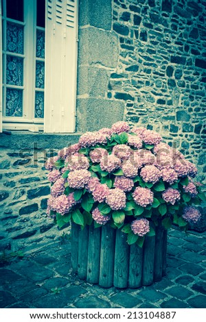 Pink hydrangea bush in wooden pot outside the old stone house under the window with lace curtain and metal shutters. Dol de Bretagne, Brittany, France.  Aged photo. - stock photo