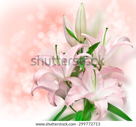 pink lilies close up - stock photo