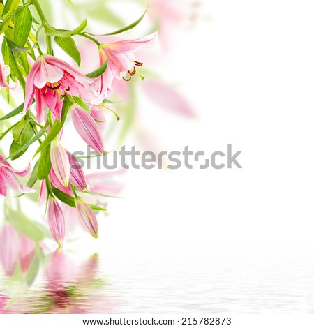 Pink lily isolated on white background with reflection in water - stock photo
