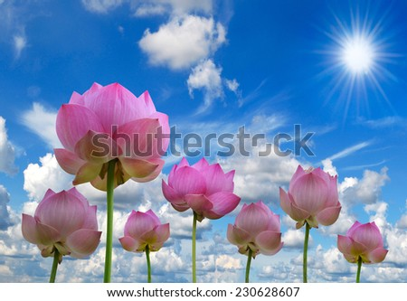 pink lotus and sun light in blue sky background - stock photo