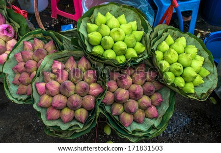 Pink Lotus Bud background at Bangkok Thailand Flower Market  - stock photo