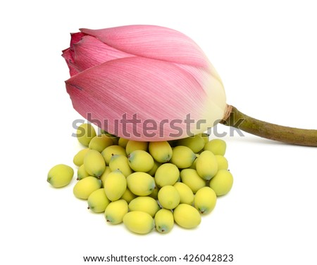 Pink lotus bud with seeds isolated on the white background - stock photo