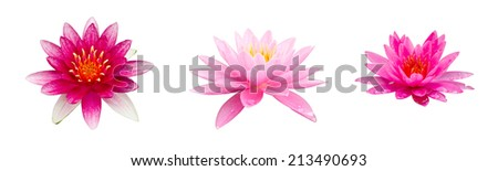 Pink lotus isolated - stock photo