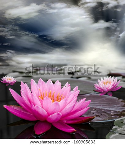 Pink Lotus, Nymphaeaceae in pond. and sky background.  - stock photo