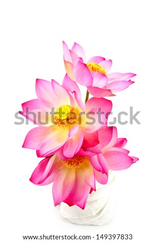 Pink lotus on isolate white background. - stock photo