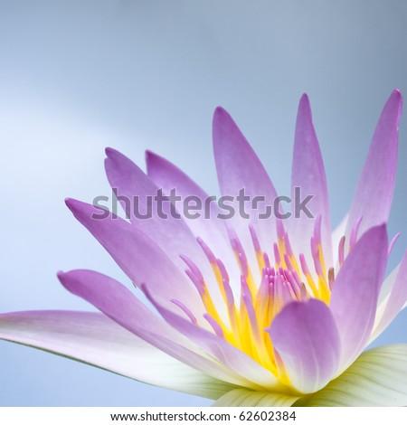 pink lotus on light blue sky background - stock photo