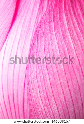 Pink lotus petal - stock photo