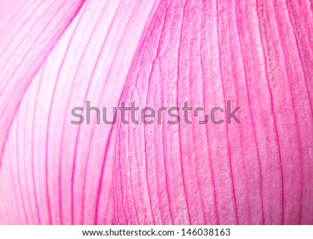 Pink lotus petal close up - stock photo