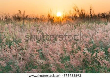 Pink meadow under beautiful sky in evening and sunset - stock photo