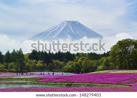 Pink moss flowers and Mount Fuji in japan - stock photo