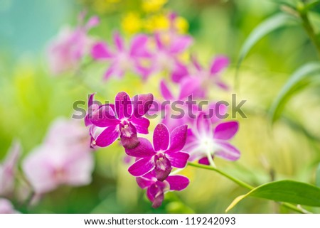 Pink orchid against of tropical flowers - stock photo