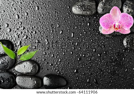 Pink orchid and basalt stones on the black background - stock photo