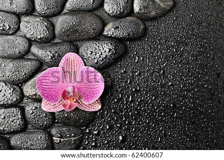 Pink orchid and zen stones on the black background - stock photo