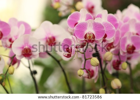 Pink orchid blossom in the garden - stock photo