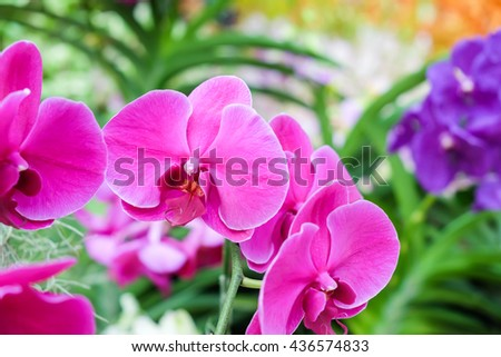 Pink orchid flower for nature background, flower background concept - stock photo
