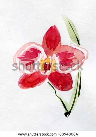 pink Orchid flower on white background. watercolor - stock photo