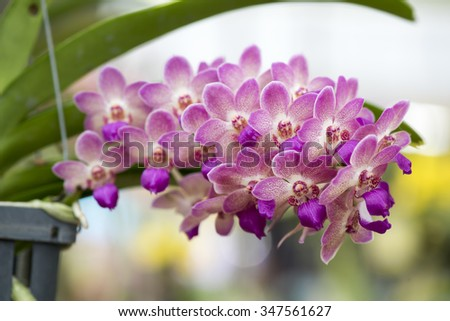 Pink orchid in the garden. - stock photo