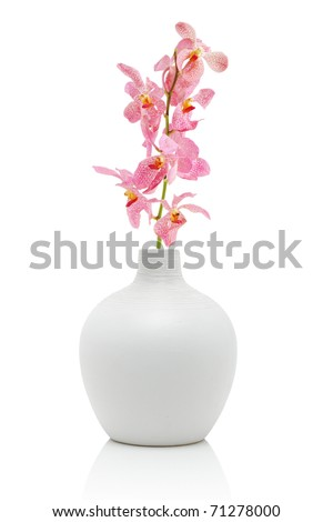 Pink orchid in white vase, isolated on white - stock photo