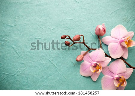 Pink orchid on a wooden background. - stock photo
