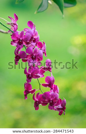 Pink orchid on nature green background - stock photo