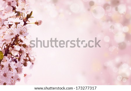 Pink orchid on spring background with colorful lights  - stock photo