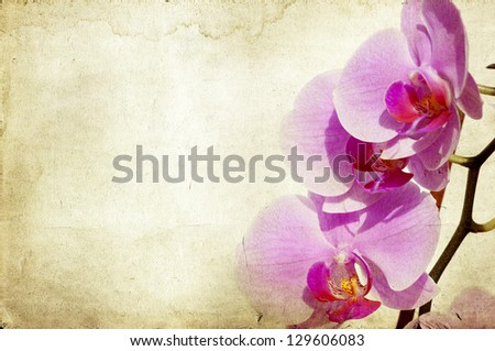 Pink orchid on vintage background - stock photo