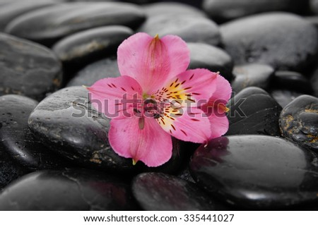 Pink orchid on zen black stones  - stock photo