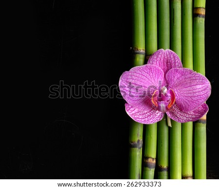 pink orchid with bamboo grove â??black background - stock photo
