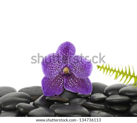 Pink orchid with green fern on pebbles - stock photo