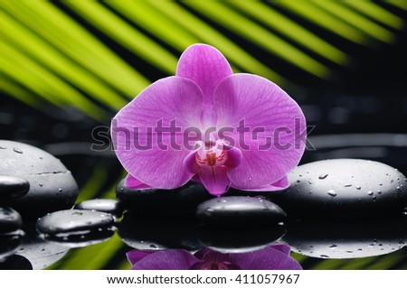 Pink orchid with palm and stones  - stock photo