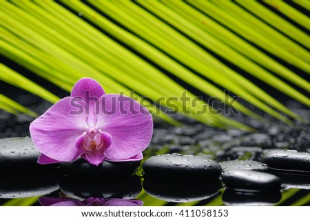 Pink orchid with palm and stones on wet background - stock photo