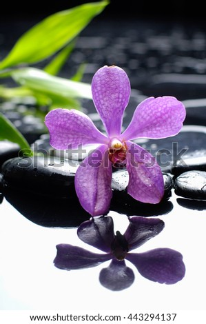 Pink orchid with pebbles and bamboo leaf on wet background - stock photo