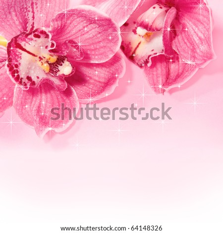 Pink orchids. - stock photo