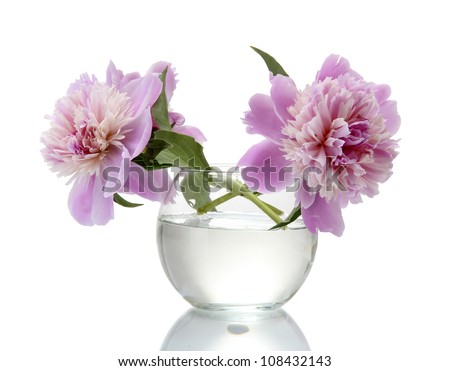 pink peonies flowers in vase isolated on white - stock photo