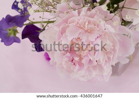 Pink Peony Flower isolated against pink background - stock photo